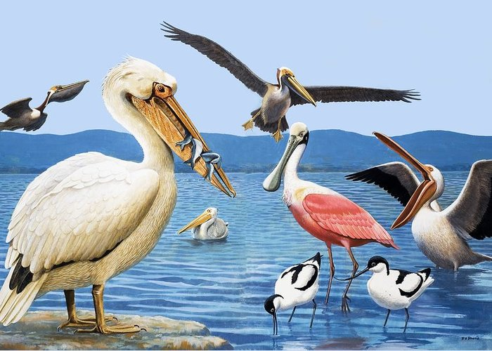 Birds; Beaks; White Pelican; Brown Pelican; Roseate Spoonbill; Avocet; Fish; Water; Lake; America Greeting Card featuring the painting Birds With Strange Beaks by R B Davis