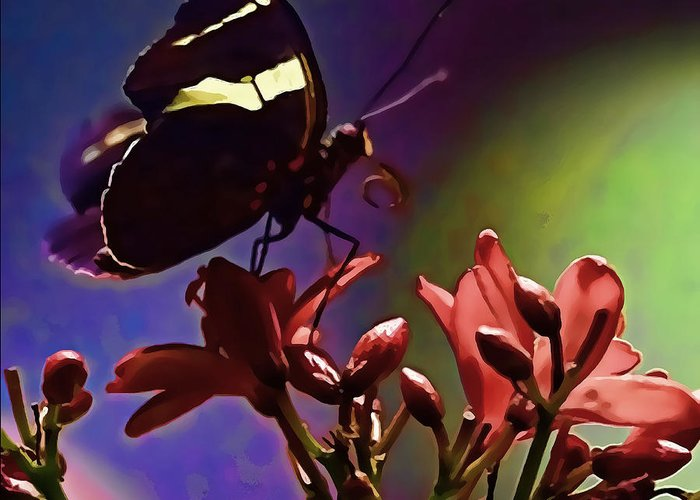 Artistic Photography Greeting Card featuring the photograph Black Butterfly With Oil Effect by Tom Prendergast