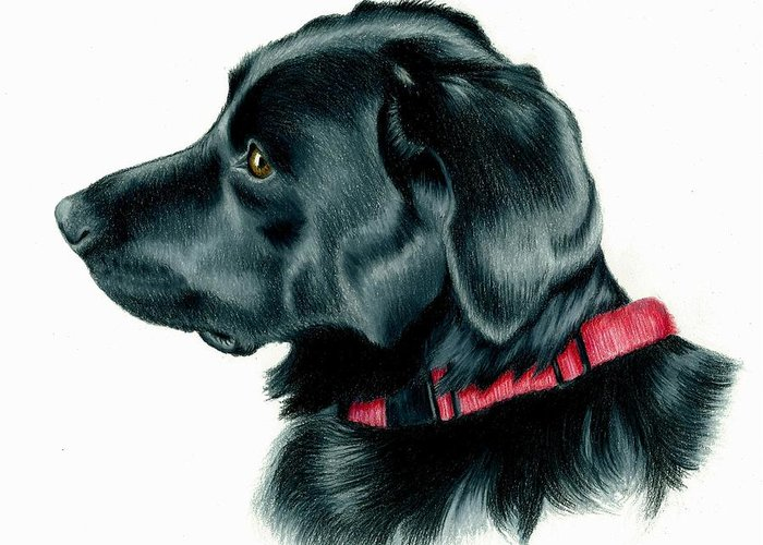 Labrador Retriever Greeting Card featuring the drawing Black Lab With Red Collar by Heather Mitchell