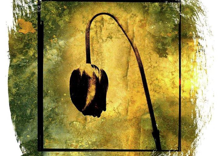 Works Greeting Card featuring the photograph Black Tulip by Bernard Jaubert
