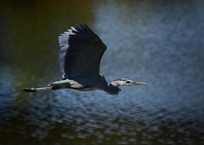 Great Blue Heron Greeting Card featuring the photograph Blue Heron Skies by Saija Lehtonen