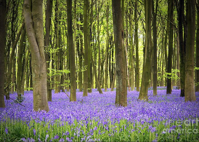 April Greeting Card featuring the photograph Bluebell Carpet by Jane Rix