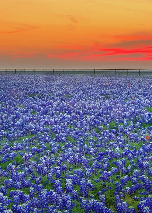 Texas Bluebonnets Greeting Card featuring the photograph Bluebonnet Sunset Vista - Texas Landscape by Jon Holiday