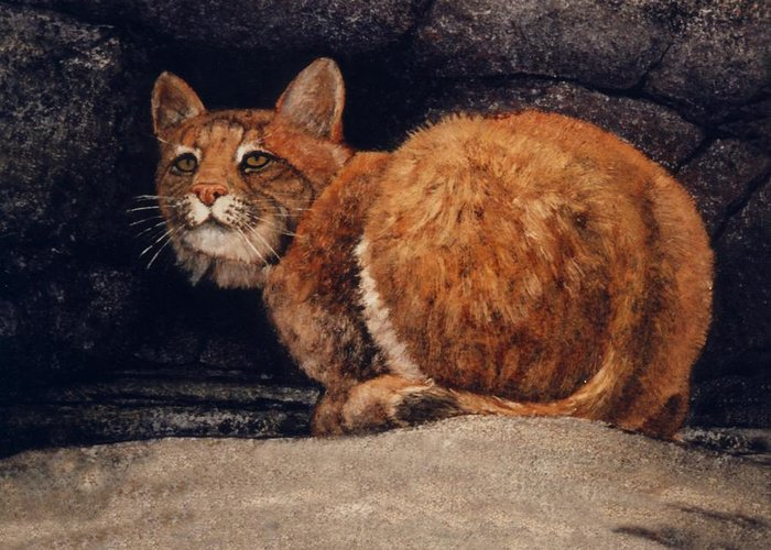 Wildlife Greeting Card featuring the painting Bobcat On Ledge by Frank Wilson