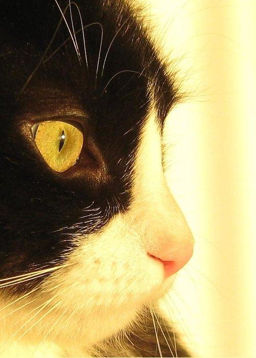 Cat Greeting Card featuring the photograph Bosco A by John Conrad Johnson III