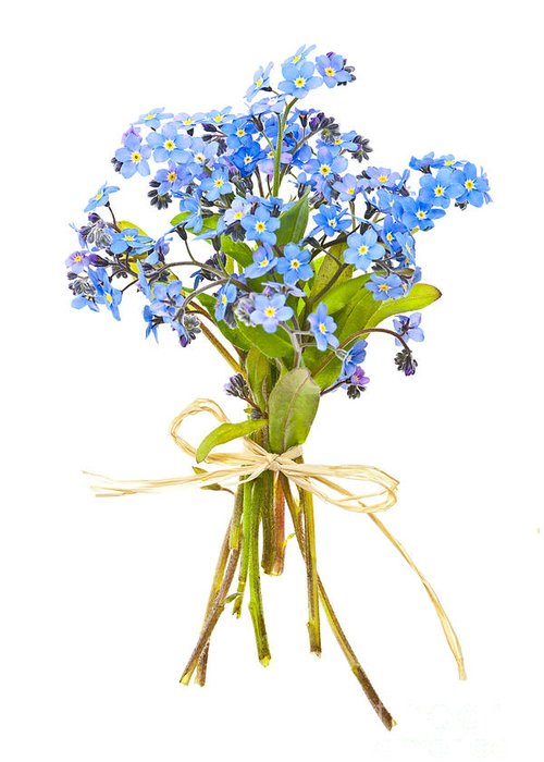 Bouquet Greeting Card featuring the photograph Bouquet Of Forget-me-nots by Elena Elisseeva