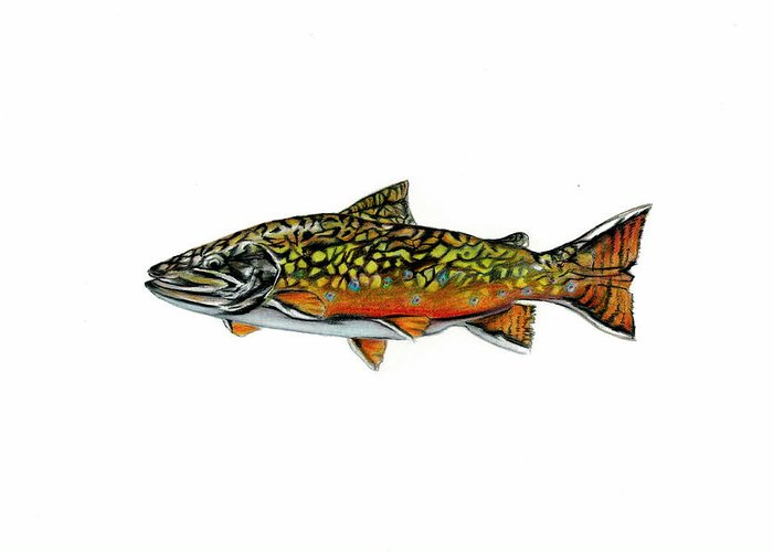 Fish Greeting Card featuring the mixed media Brook Trout by Jim Romeo
