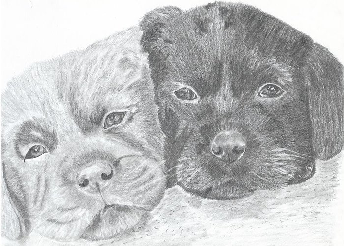 Puppies Greeting Card featuring the drawing Brothers by DebiJeen Pencils