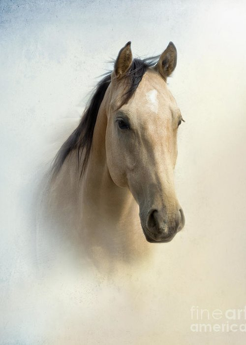 Horse Greeting Card featuring the photograph Buckskin Beauty by Betty LaRue