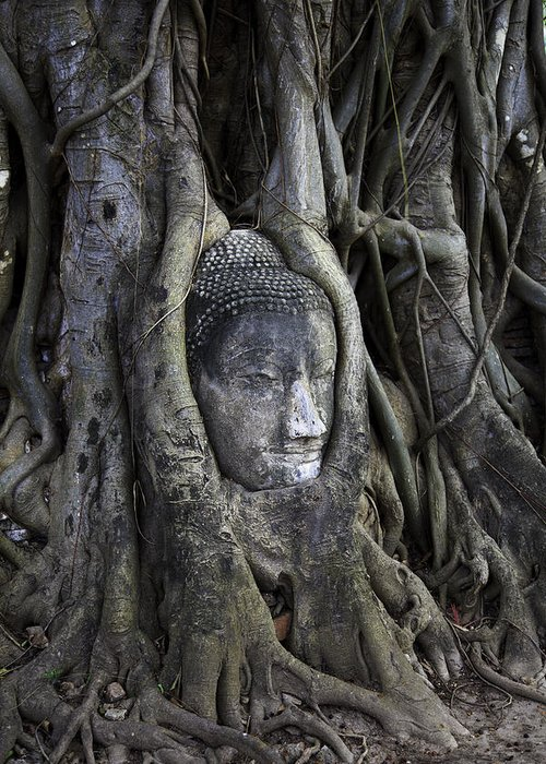 Ancient Greeting Card featuring the photograph Buddha Head In Tree by Adrian Evans