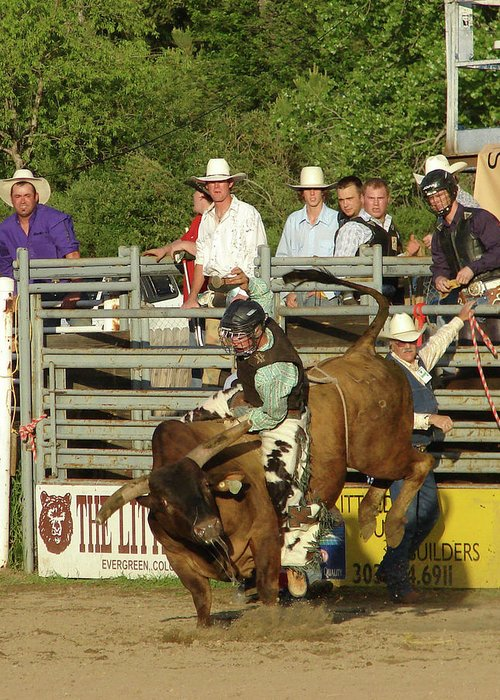 Animals Greeting Card featuring the photograph Bull Rider by Phyllis Britton