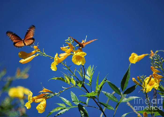 Butterfly Greeting Card featuring the photograph Butterfly In The Sonoran Desert Musuem by Donna Greene
