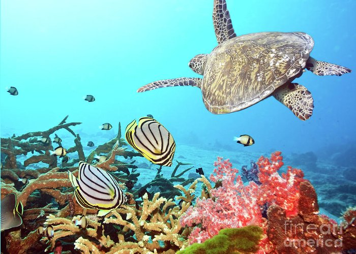 Butterflyfish Greeting Card featuring the photograph Butterflyfishes And Turtle by MotHaiBaPhoto Prints