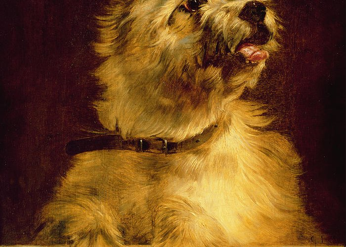 Cairn Greeting Card featuring the painting Cairn Terrier  by George Earl