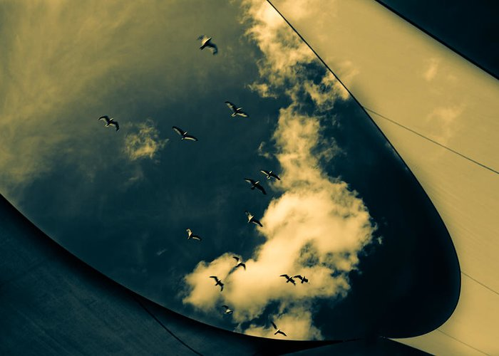 Abstract Greeting Card featuring the photograph Canvas Seagulls by Bob Orsillo