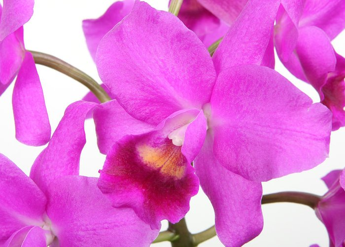 Cattleya Greeting Card featuring the photograph Cattleya Orchid by Lynn Berreitter