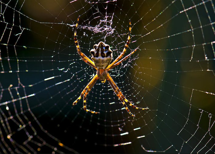 Spider Greeting Card featuring the photograph Charlotte's Web by Thanh Thuy Nguyen