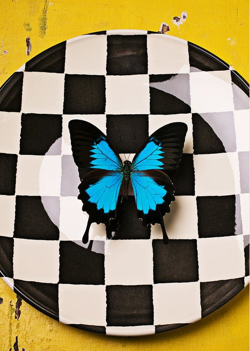 Blue Greeting Card featuring the photograph Checker Plate And Blue Butterfly by Garry Gay