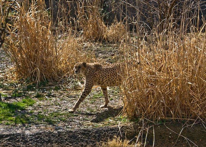 Cheetah Greeting Card featuring the photograph Cheetah In The Brush by Douglas Barnett