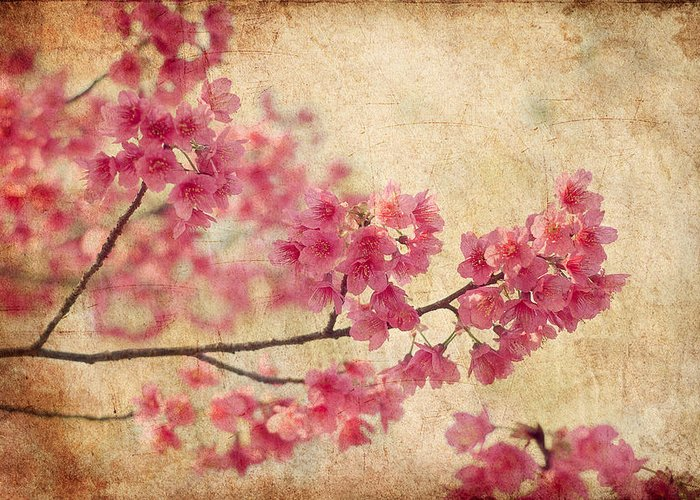 Flower Greeting Card featuring the photograph Cherry Blossoms by Rich Leighton