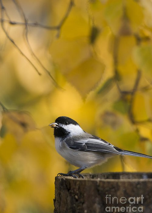 Chickadee Greeting Card featuring the photograph Chickadee On A Log by Tim Grams