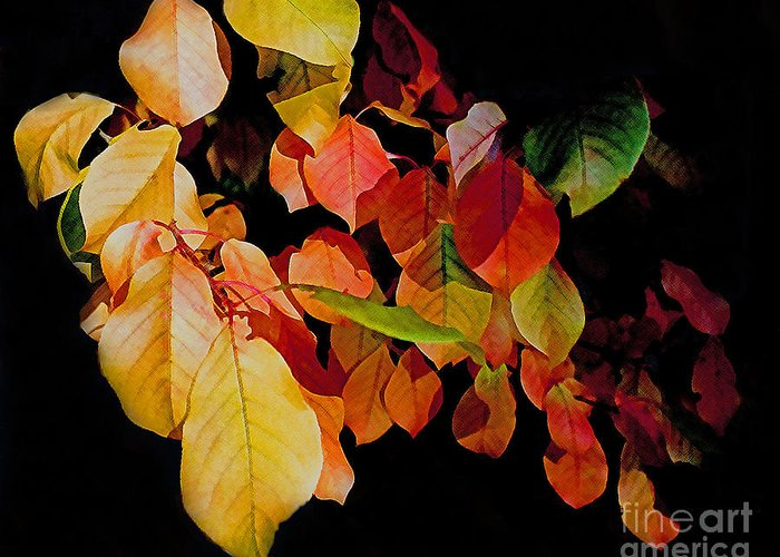 Chokecherry Greeting Card featuring the photograph Chokecherry Leaves by Terril Heilman