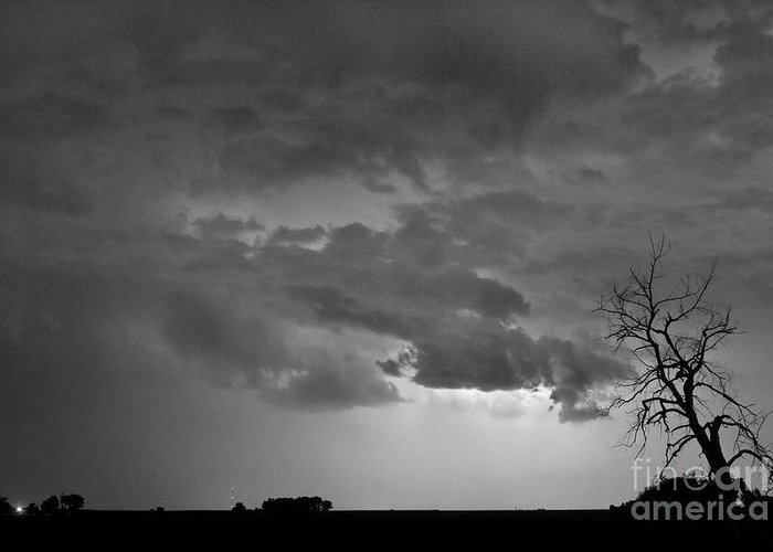Tree Greeting Card featuring the photograph Co Cloud To Cloud Lightning Thunderstorm 27 Bw by James BO Insogna