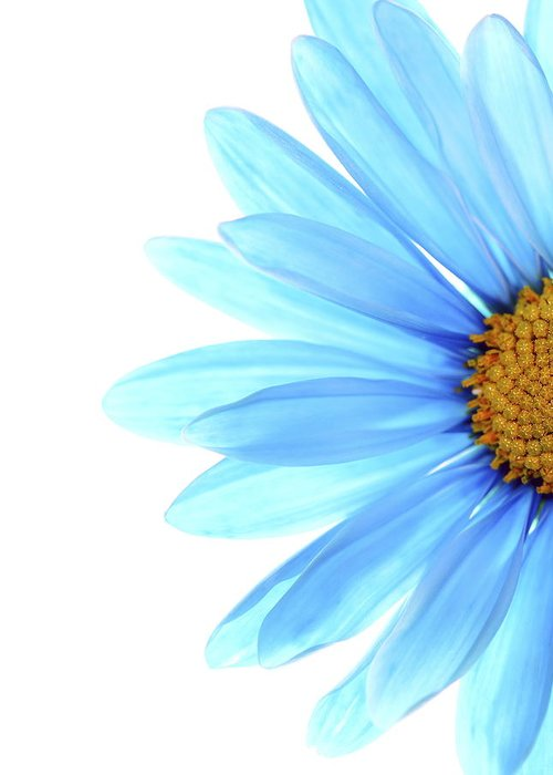 Daisy Greeting Card featuring the photograph Color Me Blue by Rebecca Cozart
