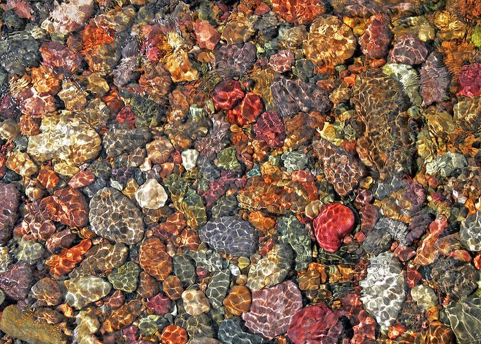 Rock Creek Greeting Card featuring the photograph Colorful Rocks In Stream Bed Montana by Jennie Marie Schell