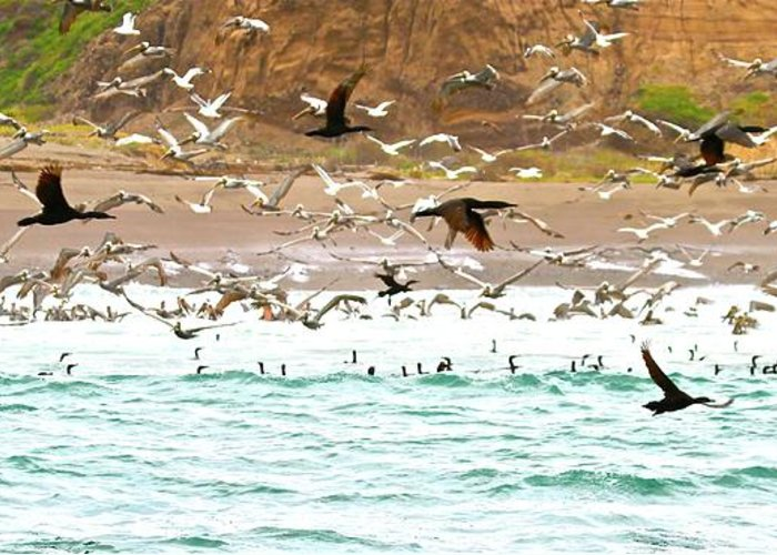 Cormorants Greeting Card featuring the photograph Cormorant Flight In Frenzy by Gus McCrea