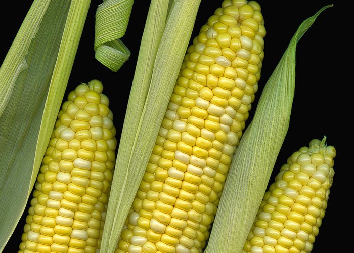 Corn Greeting Card featuring the photograph Corn On The Cob I by Tom Mc Nemar