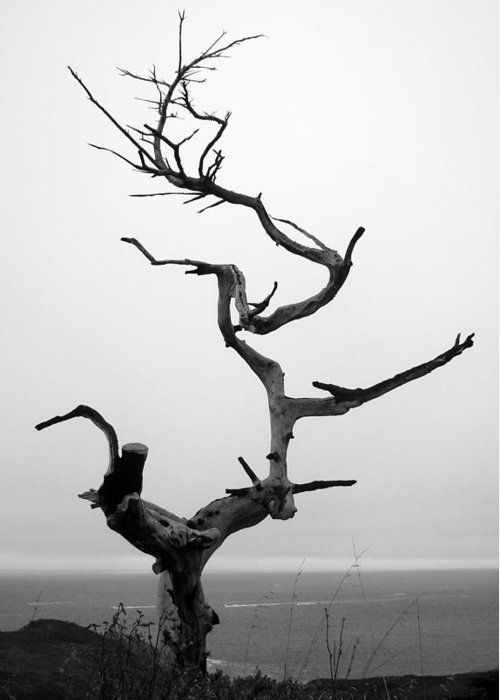 Tree Greeting Card featuring the photograph Crooked Tree by Matt Hanson