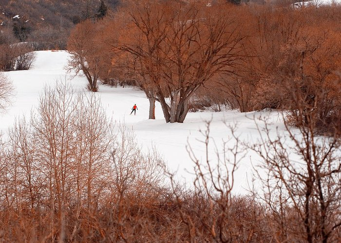 Ski Greeting Card featuring the photograph Crosscountry Skier by Utah Images
