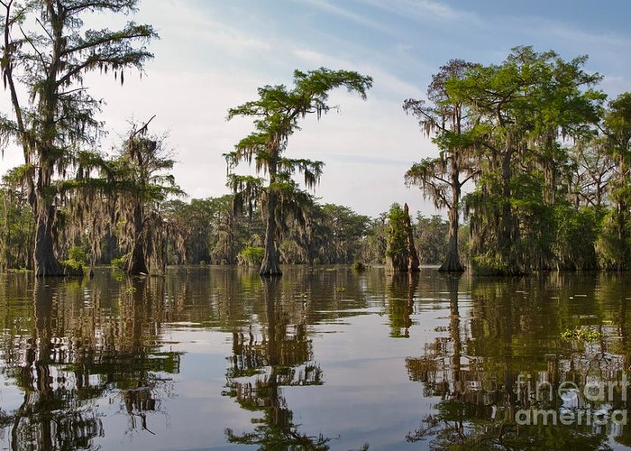 Swamp Greeting Card featuring the photograph Cypress Trees And Spanish Moss In Lake Martin by Louise Heusinkveld
