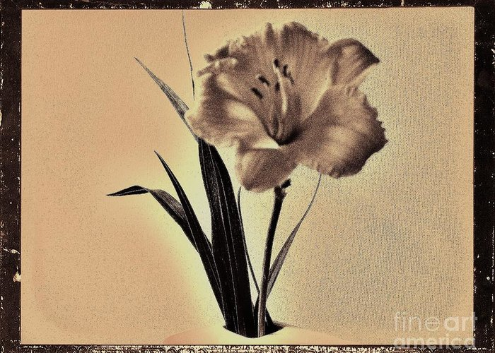 Photo Greeting Card featuring the photograph Daylily Of Old by Marsha Heiken