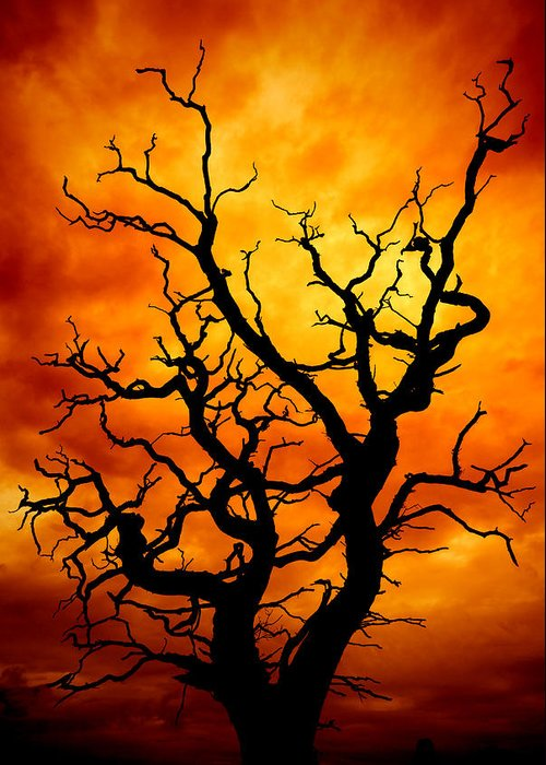 Atmosphere Greeting Card featuring the photograph Dead Tree by Meirion Matthias