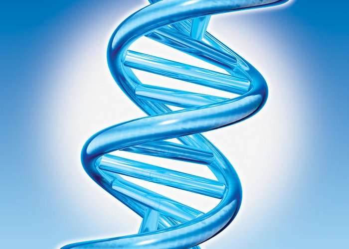 Dna Greeting Card featuring the digital art Dna Double Helix by Marc Phares and Photo Researchers