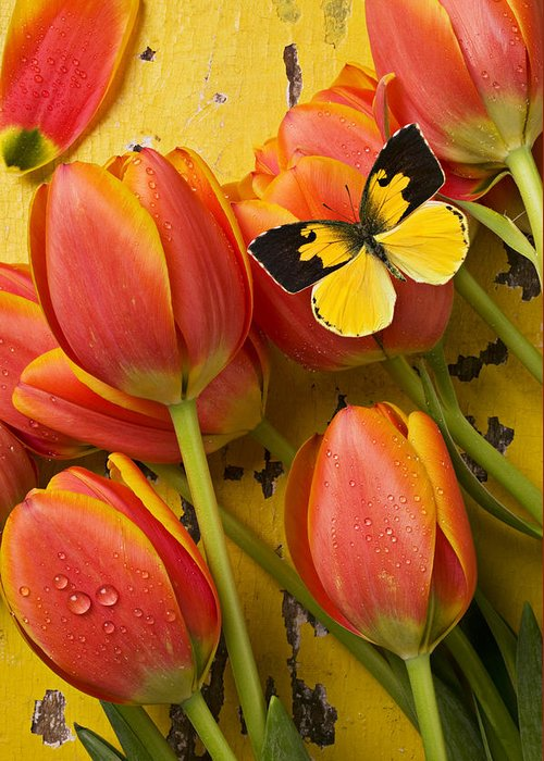 Butterfly Greeting Card featuring the photograph Dogface Butterfly And Tulips by Garry Gay