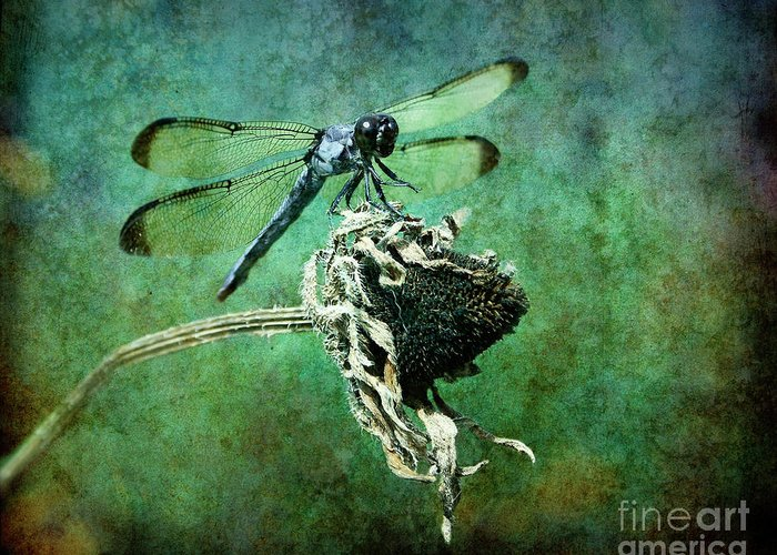 Dragonfly Greeting Card featuring the photograph Dragonfly Art by Sari Sauls