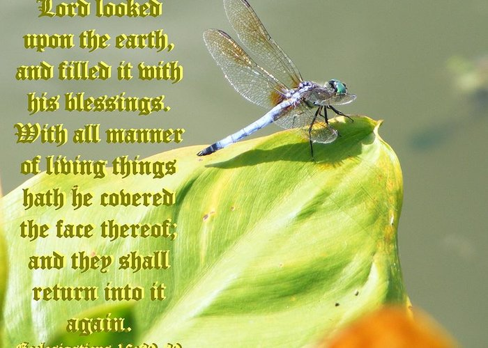 Nature Greeting Card featuring the photograph Ecclesiasticus Sixteen Twenty Nine by Ravenna Taylor