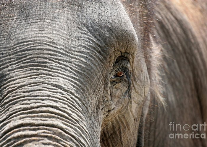 Asian Greeting Card featuring the photograph Elephant Eye by Jeannie Burleson