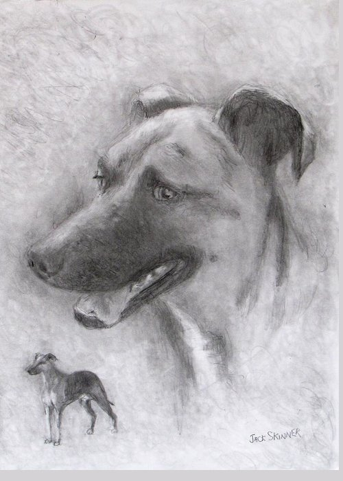 Dog Greeting Card featuring the drawing Eliot by Jack Skinner