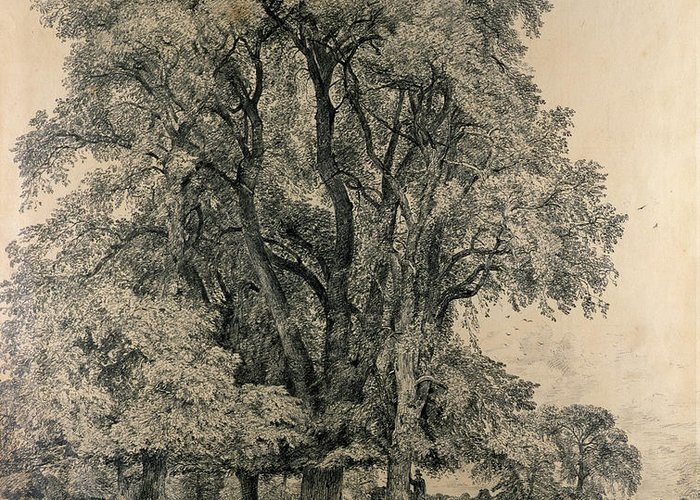 Elm Trees In Old Hall Park Greeting Card featuring the drawing Elm Trees In Old Hall Park by John Constable