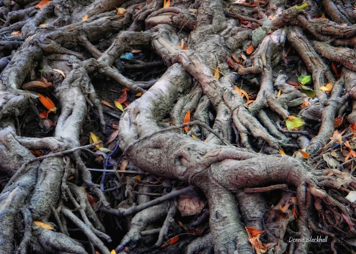 Roots Greeting Card featuring the photograph Entanglement by Donna Blackhall