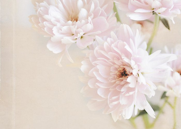 Flowers Greeting Card featuring the photograph Faded Dream by Lyn Randle