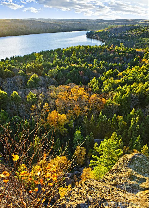 Forest Greeting Card featuring the photograph Fall Forest And Lake Top View by Elena Elisseeva