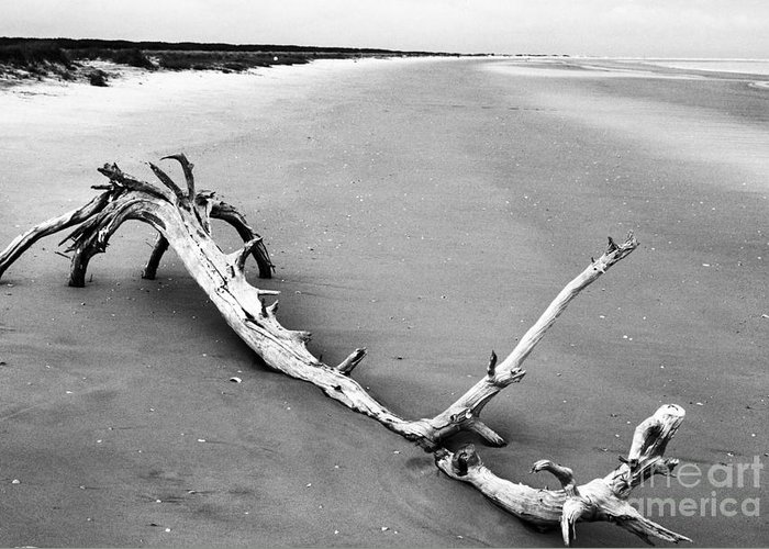 Usa Greeting Card featuring the photograph Fallen Tree Beach by Thomas R Fletcher