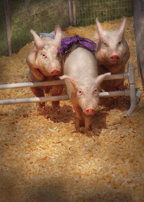 Pig Greeting Card featuring the photograph Farm - Pig - Getting Past Hurdles by Mike Savad