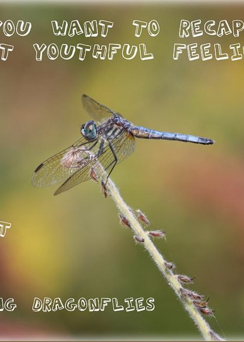 Dragonfly Art Greeting Card featuring the photograph Feel Young Again by Carol Groenen