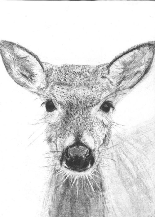 Deer Greeting Card featuring the drawing Female White-tailed Deer by Marqueta Graham